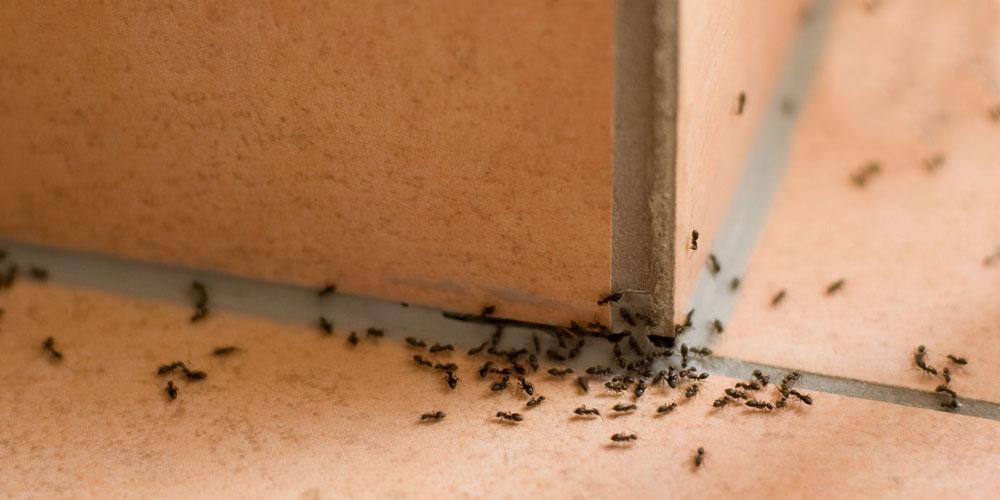 Eliminar hormigas cantabria tratamientos hormigas - Que hacer contra las cucarachas ...