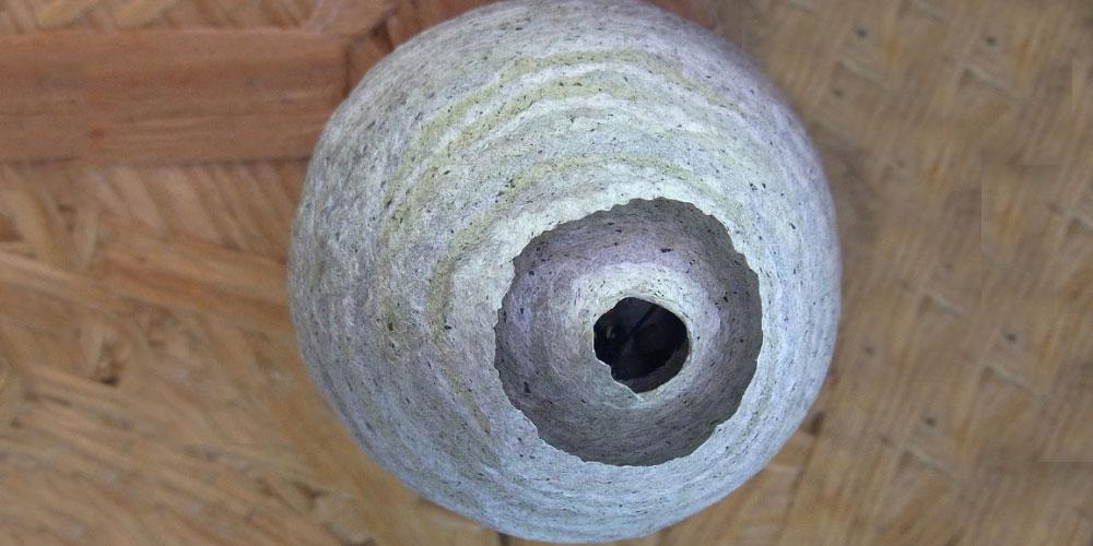 Tengo un nido de avispas en la fachada de mi casa cts norte - Tengo pulgas en casa ...